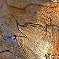 Abstract In Old Wood by Gary Holmes