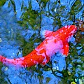 Abstract Koi 4 by Amy Vangsgard