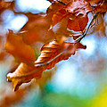 Abstract Leafs by Tino Lopes