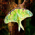 Abstract Luna Moth Painterly by Andee Design