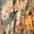 Abstract Natural Stone by Maria Urso