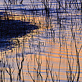 Abstract Nature At Sunset by Guido Montanes Castillo