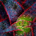 Abstract Of Bromeliad by Robert Storost