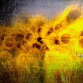 Abstract Of Sunflowers by Alice Gipson