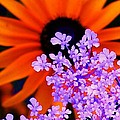 Abstract Orange And Purple Flower by Eric  Schiabor