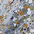 Abstract Orange Lichen 2 by Chase Taylor