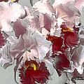 Abstract Orchid by Linda  Parker