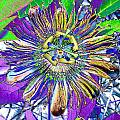 Abstract Passion Flower by Annette Allman