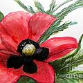 Abstract Poppy by Linda Waidelich