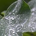 Abstract Rain Glitter by Maria Urso