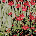 Abstract Red Flowers by Kenny Glotfelty