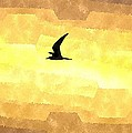 Abstract Seagull Flight by Brian Raggatt