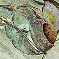 Abstract Seed Pod 1 by Bruce Iorio