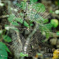 Abstract Spider Web by Donna Brown
