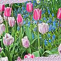 Abstract Spring Floral Fine Art Prints by Valerie Garner