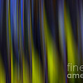 Abstract Vertical Red Yellow Blue And Green by Marvin Spates