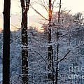 Abstract Winter Sunset by Andrea Rea
