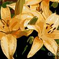 Abstract Yellow Asiatic Lily - 1 by Kenny Glotfelty