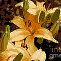 Abstract Yellow Asiatic Lily - 2 by Kenny Glotfelty