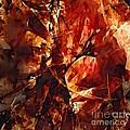 Abstraction  272 - Marucii by Marek Lutek