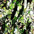 Abstraction Green And White by David Lane