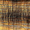 Abstract Reed And Water Patterns by James Brunker