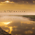 Geese Over The River by Adrian Campfield