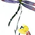 Acacion Dragonfly by Beverley Harper Tinsley
