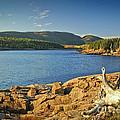 Acadia  by Alana Ranney