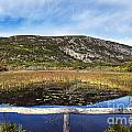 Acadia  Autumn by John Greim