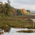 Acadia Beaver Pond by Chris Scroggins