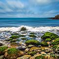 Acadia Ocean Breeze by Susan Cole Kelly