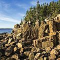 Acadia Seascape by John Greim
