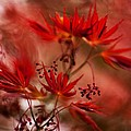 Acer Storm by Mike Reid