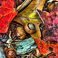 Acorns And Leaves by Kenny Francis
