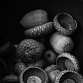 Acorns Black And White by Edward Fielding