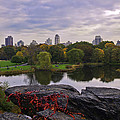 Across The Pond 2 - Central Park - Nyc by Madeline Ellis