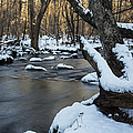 Adamsville Brook by Andrew Pacheco