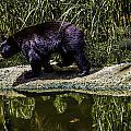 Adhd Bear by Stephen Brown