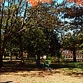 Adirondack Chairs 4 - Davidson College by Paulette B Wright