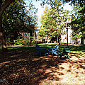 Adirondack Chairs 5 - Davidson College by Paulette B Wright