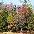 Adirondack Color II by David Patterson