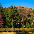 Adirondack Color IIi by David Patterson