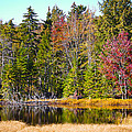 Adirondack Color Near Old Forge New York by David Patterson