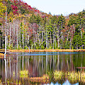 Adirondack Color Viii by David Patterson