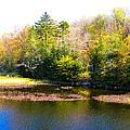Adirondack Color X by David Patterson