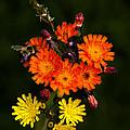 Adirondack Flowers by David Patterson