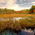 Adirondack Pond by David Patterson