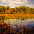 Adirondack Pond II by David Patterson