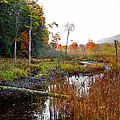 Adirondack Pond Iv by David Patterson